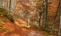 Concilier espaces naturels et randonnée en forêt