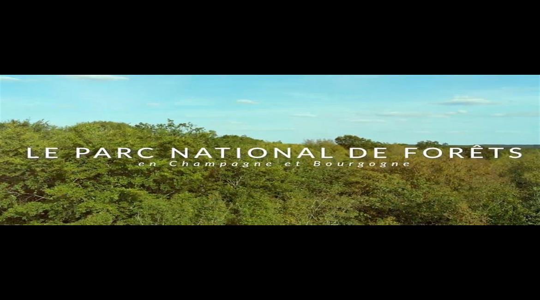 Le Parc national de forêts en Champagne et Bourgogne est né